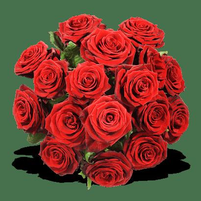 Blumenversand - rote Rosen verschicken und andere Blumen verschicken