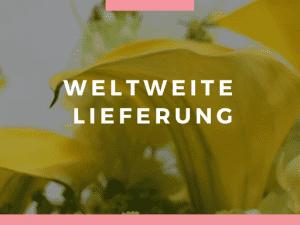 Weltweiter Blumen verschicken - Blumenversand in alle Länder