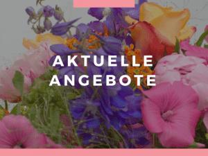 Aktuelle Blumen - Angebote