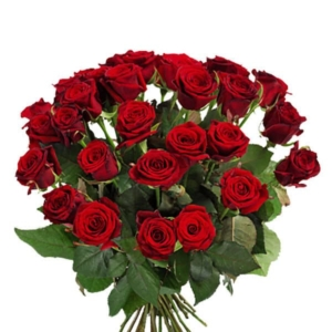 Red Roses to Austria