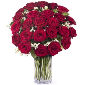 echte liebe 24 rosen