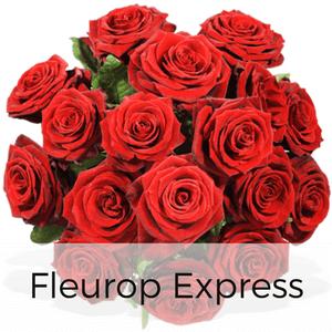 Rosen Versand mit Fleurop - Rote Rosen verschicken