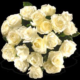 Weise Rosen