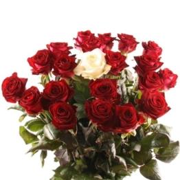 100 Rosen verschicken langstielige-premium-rosen-mit-rabatt-farbe-anzahl-waehlbar-alle-farben-1