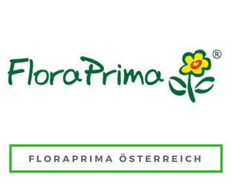 Blumen nach Österreich schicken