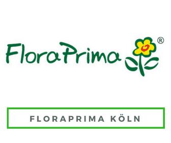 Blumenversand Köln Floraprima