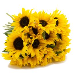 17 Sonnenblumen