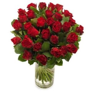 Dunkelrote Rosen - Blumenversand USA