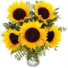 Strahlende Sonnenblumen