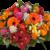 Herbstblumen Fleurop