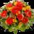 Herbstklopfen Fleurop