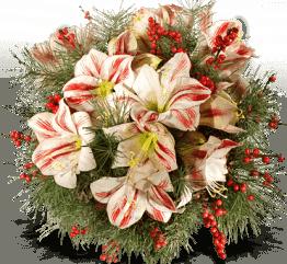 Blumenstrauß mit Amaryllis