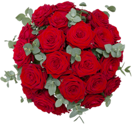 Rosesn-der-Klassiker
