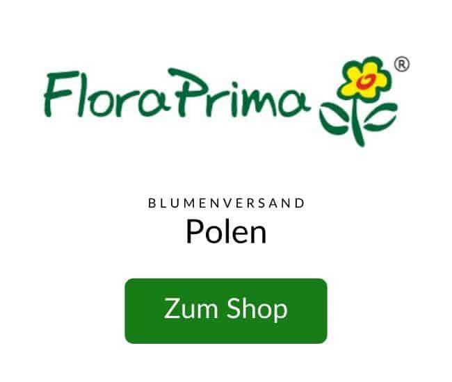 Blumenversand-Polen-Blumen-verschicken-FLORA-P