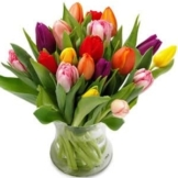 Tulpenversuchung
