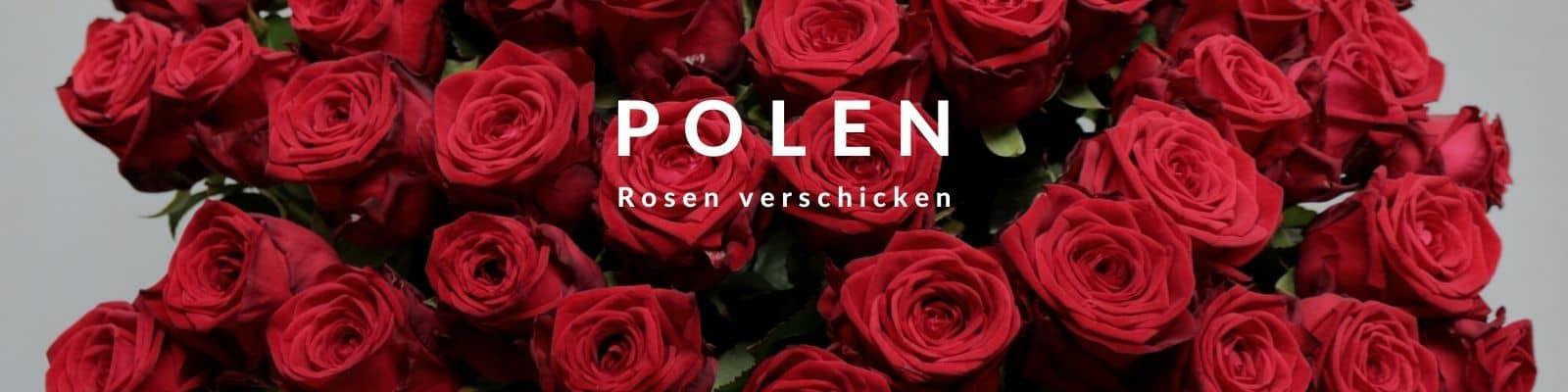 Rosen verschicken Polen - Rosenbote