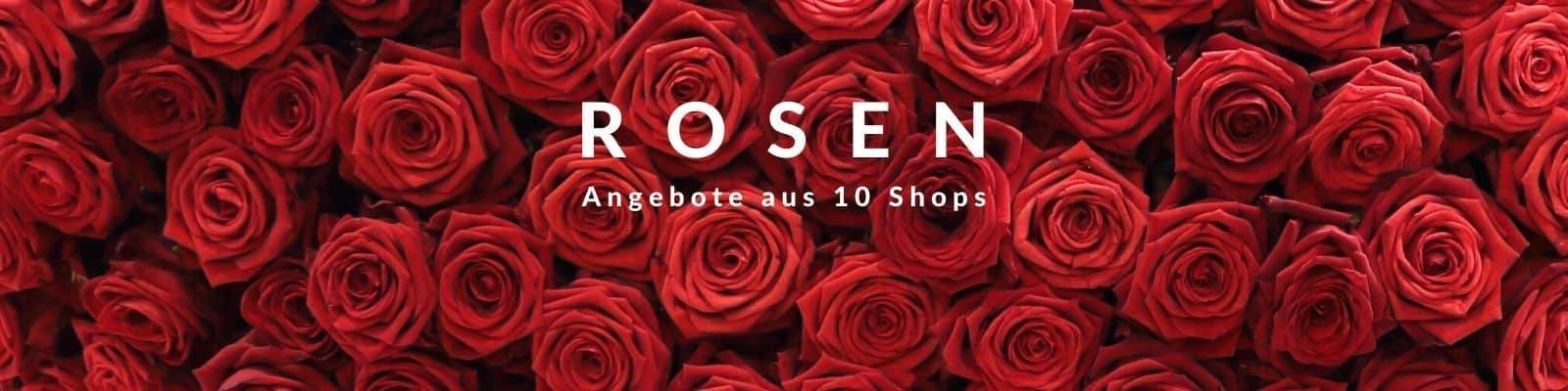 Rosen verschicken - Rosenversand