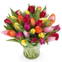 Tulpen bunt