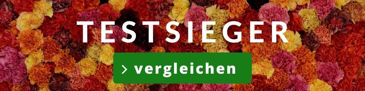 Blumenversand Test - Blumen verschicken Test