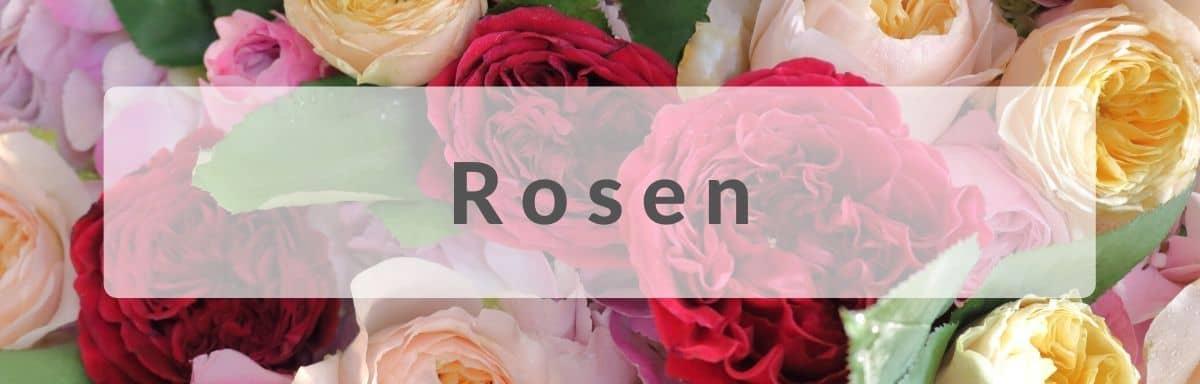 Rosen verschicken - Rosenversand - Rosenstrauß versenden