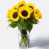 Sonnenblumen-10-Stiele