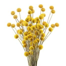 Tockenblumen gelb