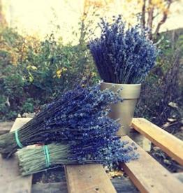 Lavendel a