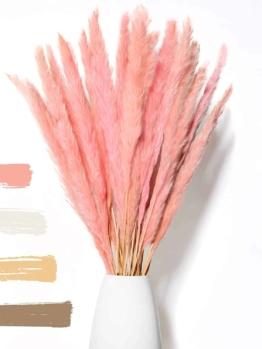 Trockenblumen - Pampas rosa