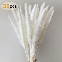 Pampas weiß
