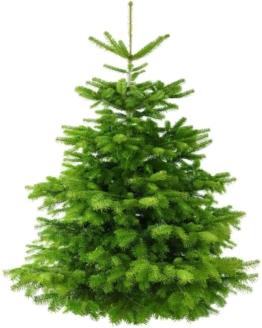 Weihnachtsbaum-Tannenbaum Amazon