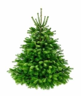 Weihnachtsbaum-Tannenbaum Kaisertanne