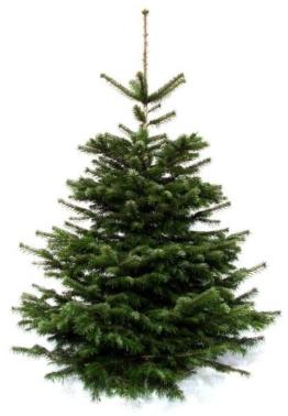Weihnachtsbaum-Tannenbaum Weihnachtsbaum-Land