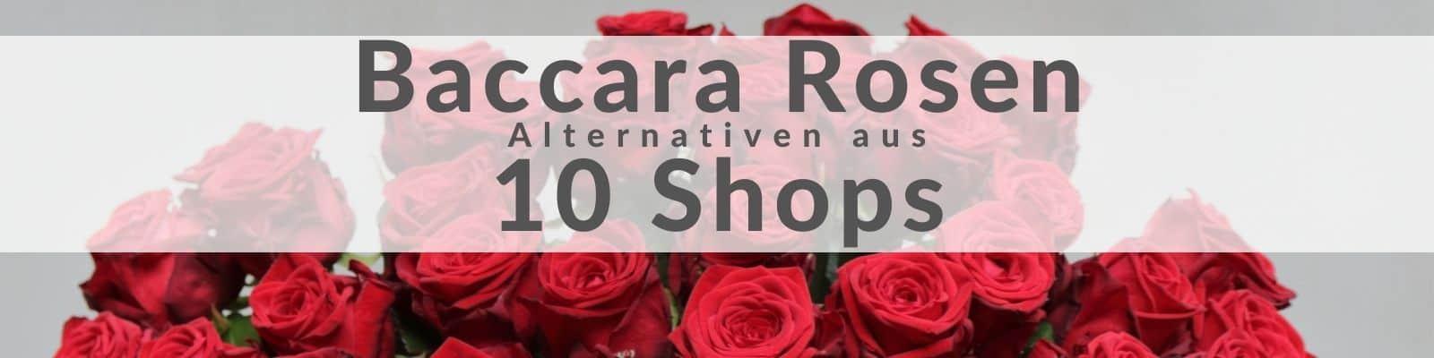 Baccara Rosen - zum günstigen Preis kaufen