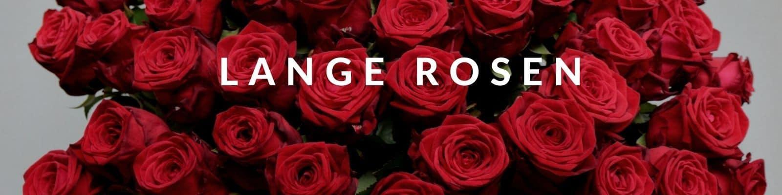 Langstielige Rosen bestellen